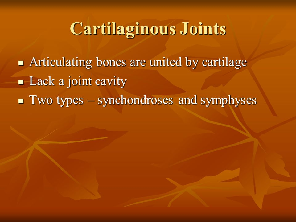 Cartilaginous Joints Articulating bones are united by cartilage Articulating bones are united by cartilage Lack a joint cavity Lack a joint cavity Two types – synchondroses and symphyses Two types – synchondroses and symphyses