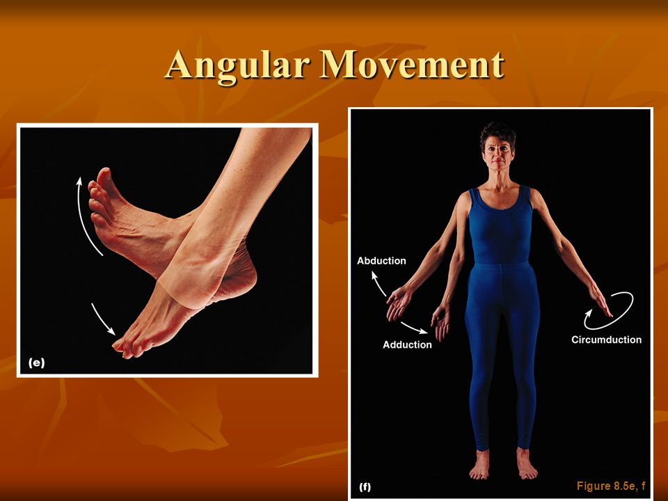 Angular Movement Figure 8.5e, f