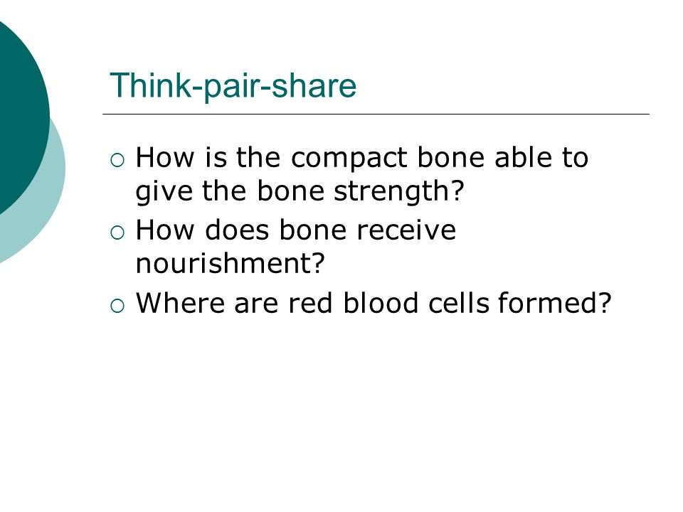 Think-pair-share  How is the compact bone able to give the bone strength?  How does bone receive nourishment?  Where are red blood cells formed?