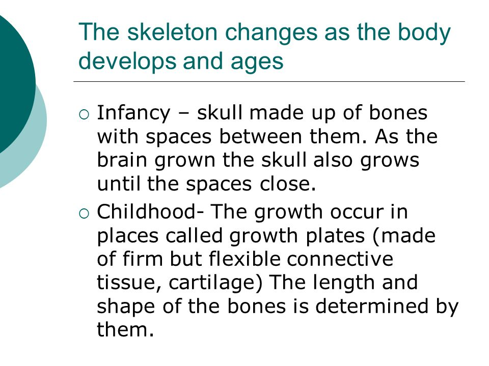 The skeleton changes as the body develops and ages  Infancy – skull made up of bones with spaces between them. As the brain grown the skull also grow