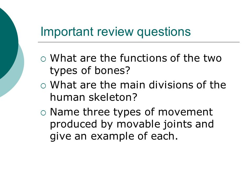 Important review questions  What are the functions of the two types of bones?  What are the main divisions of the human skeleton?  Name three types