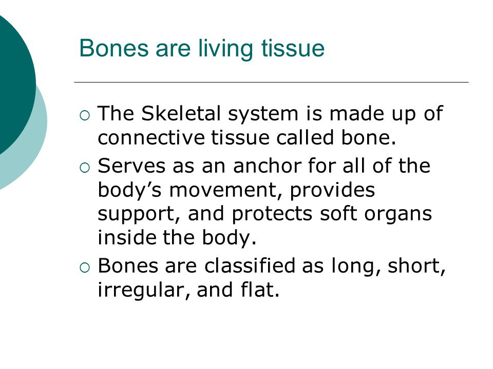 Bones are living tissue  The Skeletal system is made up of connective tissue called bone.  Serves as an anchor for all of the body's movement, provi