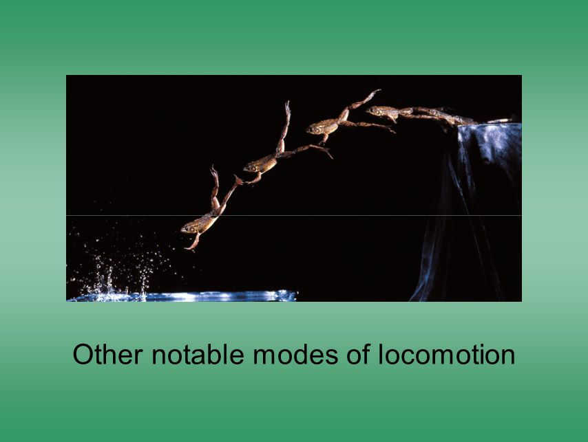 Other notable modes of locomotion
