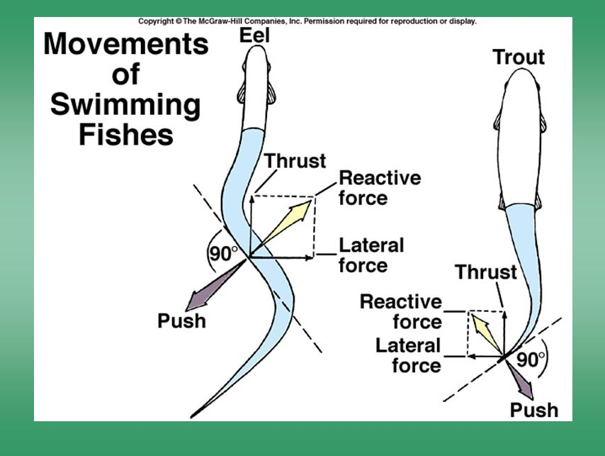 Movements of swimming fishes