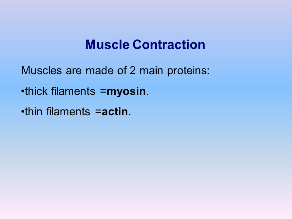 Muscle Contraction Muscles are made of 2 main proteins: thick filaments =myosin. thin filaments =actin.