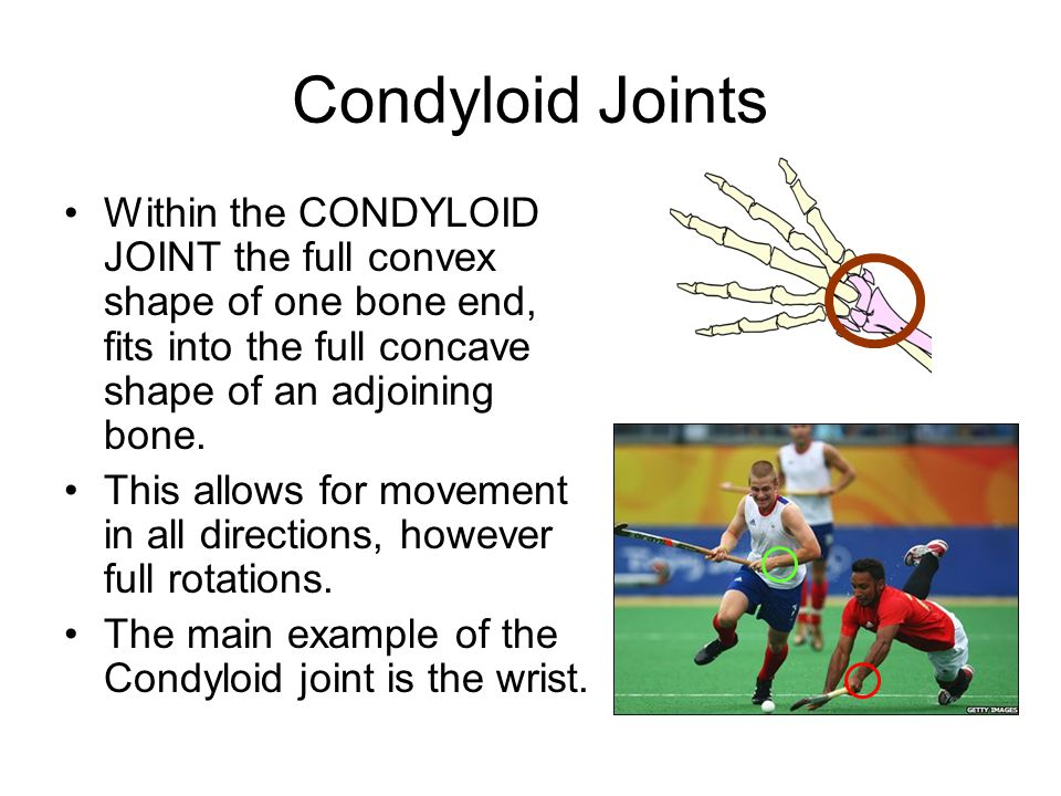 Condyloid Joints Within the CONDYLOID JOINT the full convex shape of one bone end, fits into the full concave shape of an adjoining bone. This allows