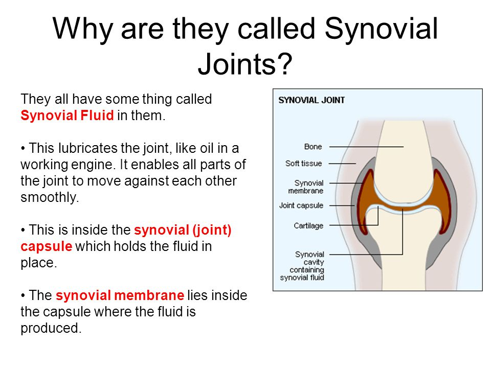 Why are they called Synovial Joints? They all have some thing called Synovial Fluid in them. This lubricates the joint, like oil in a working engine.