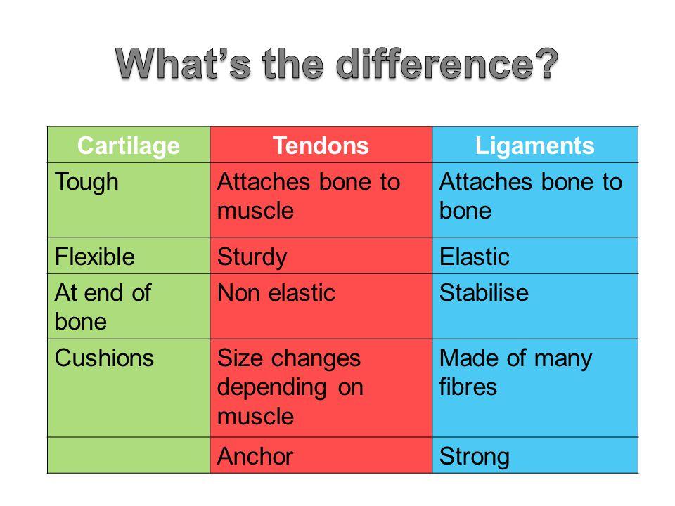 CartilageTendonsLigaments ToughAttaches bone to muscle Attaches bone to bone FlexibleSturdyElastic At end of bone Non elasticStabilise CushionsSize ch