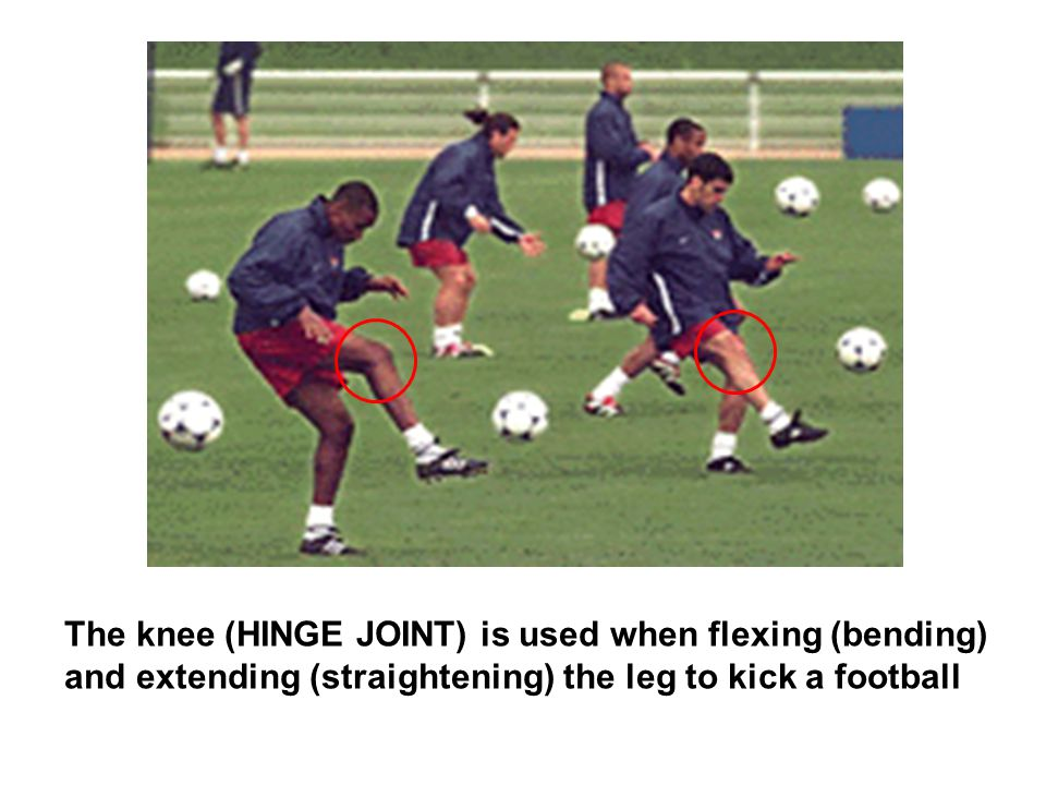 The knee (HINGE JOINT) is used when flexing (bending) and extending (straightening) the leg to kick a football