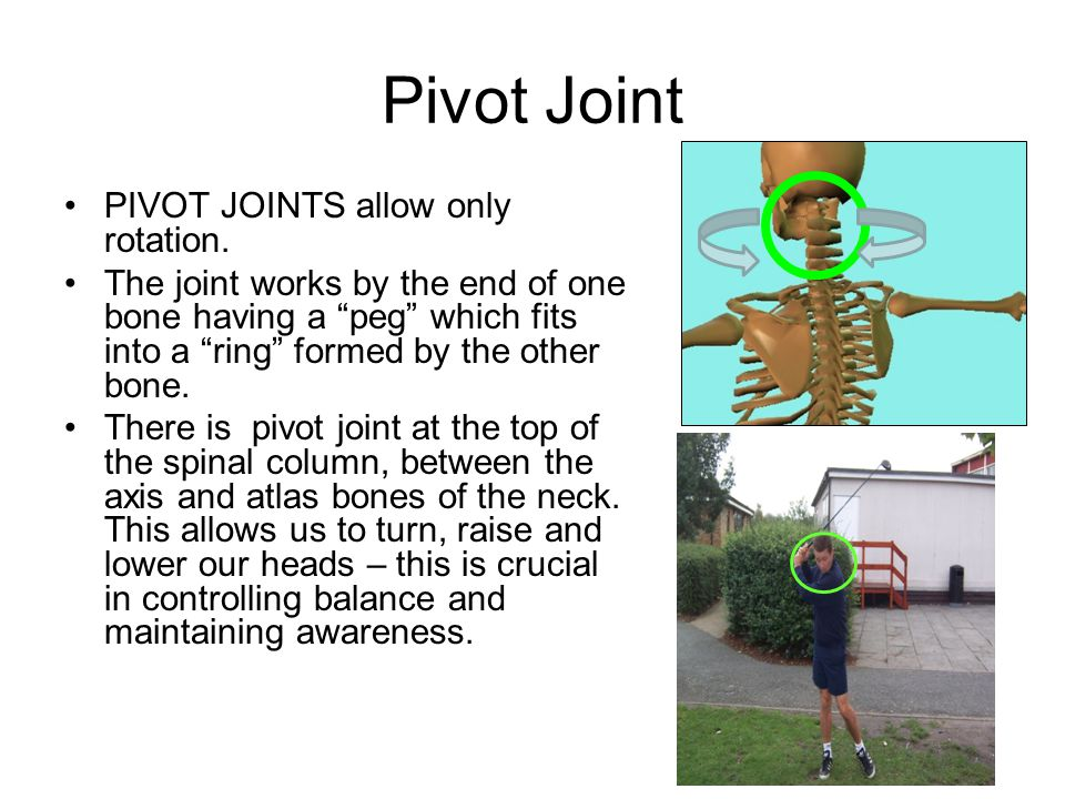 """Pivot Joint PIVOT JOINTS allow only rotation. The joint works by the end of one bone having a """"peg"""" which fits into a """"ring"""" formed by the other bone."""