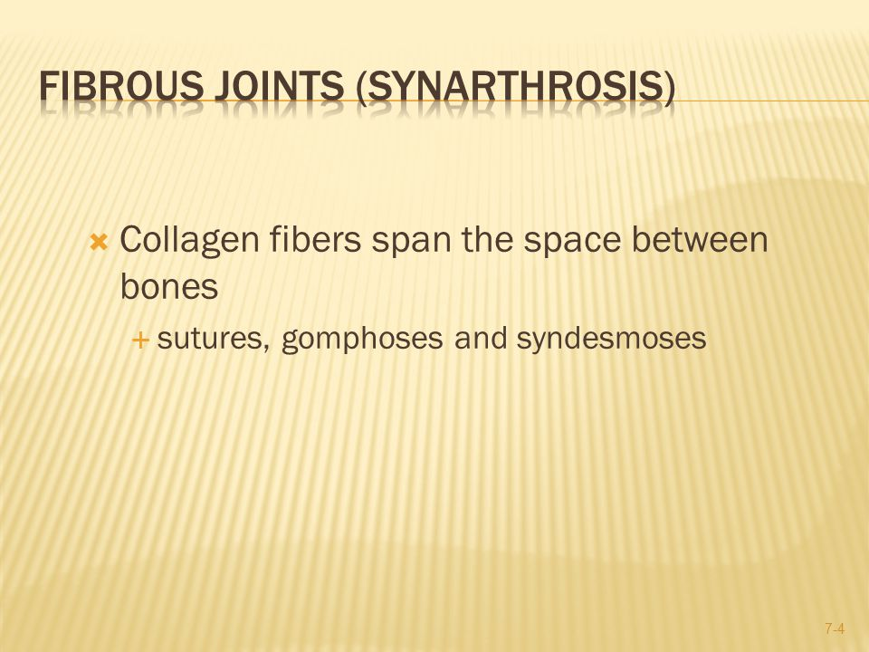  Collagen fibers span the space between bones  sutures, gomphoses and syndesmoses 7-4