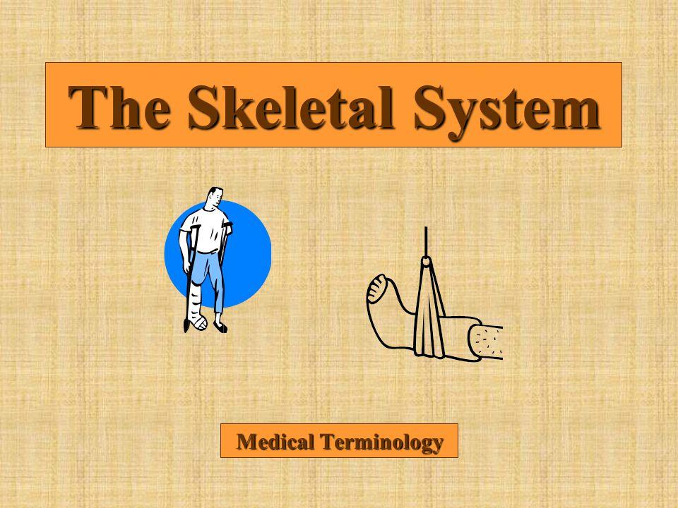 The Skeletal System Medical Terminology