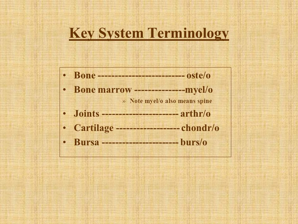 Key System Terminology Bone -------------------------- oste/o Bone marrow ---------------myel/o »Note myel/o also means spine Joints -----------------