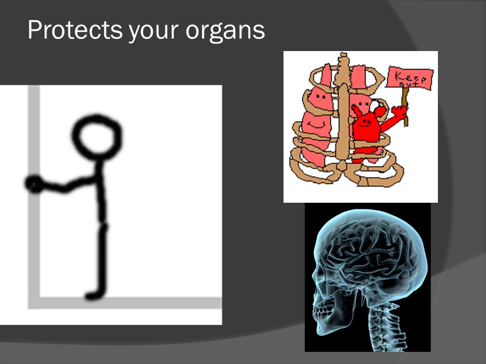 Protects your organs