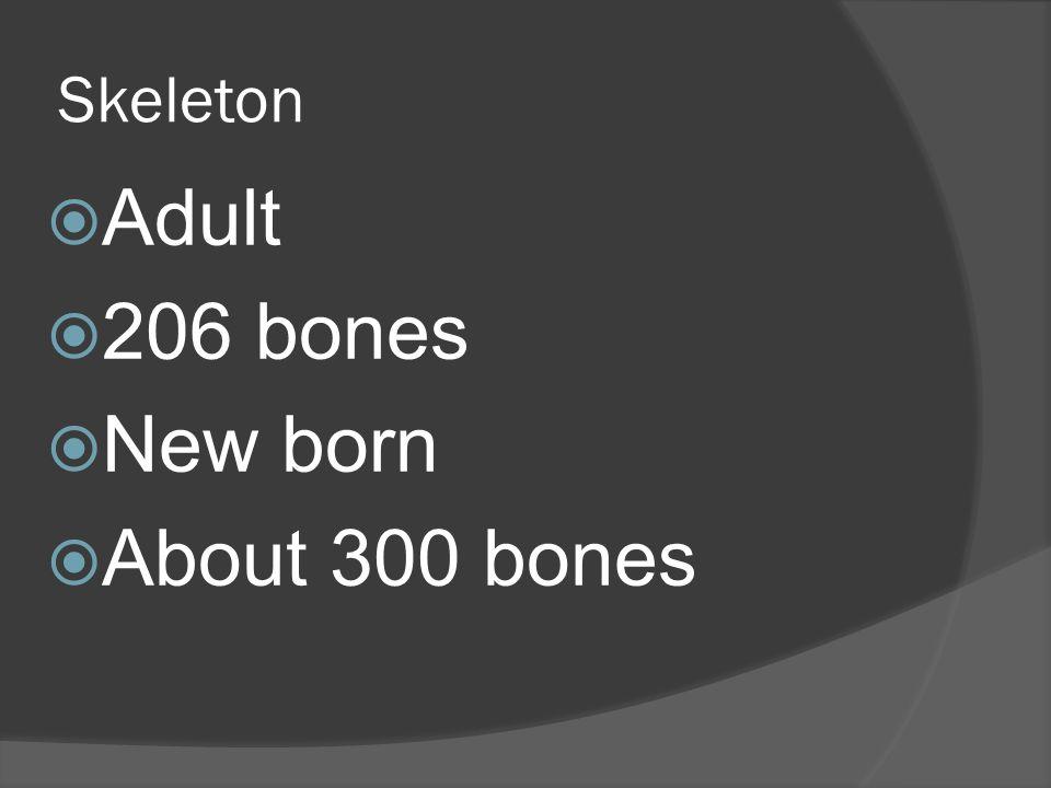 Skeleton  Adult  206 bones  New born  About 300 bones