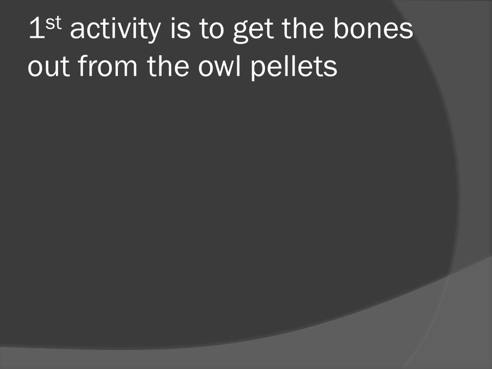 1 st activity is to get the bones out from the owl pellets