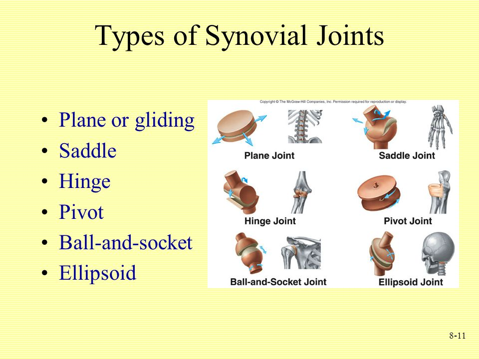 8-11 Types of Synovial Joints Plane or gliding Saddle Hinge Pivot Ball-and-socket Ellipsoid