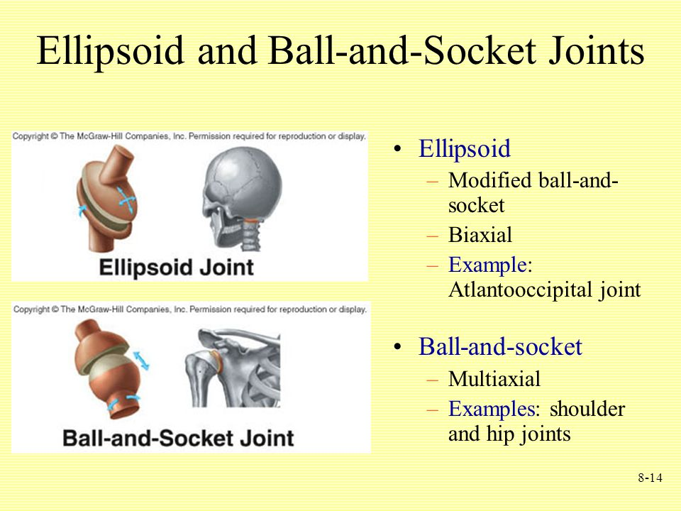 8-14 Ellipsoid and Ball-and-Socket Joints Ellipsoid –Modified ball-and- socket –Biaxial –Example: Atlantooccipital joint Ball-and-socket –Multiaxial –Examples: shoulder and hip joints