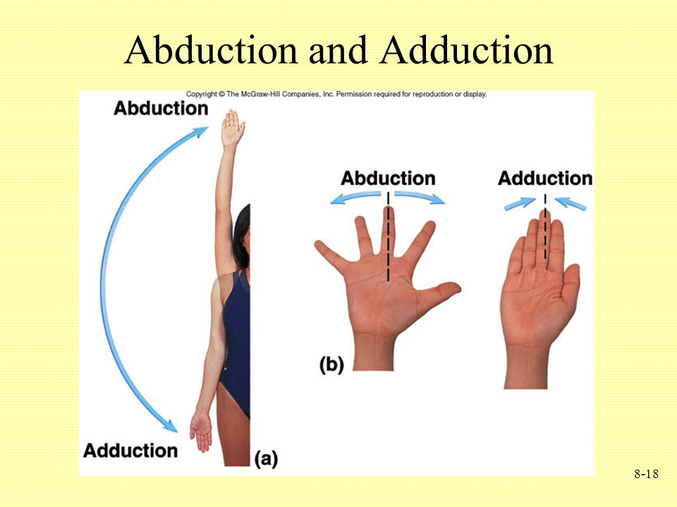 8-18 Abduction and Adduction