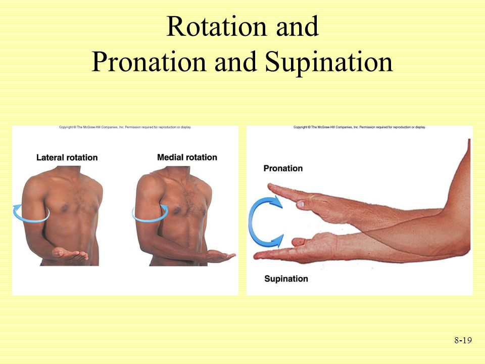8-19 Rotation and Pronation and Supination