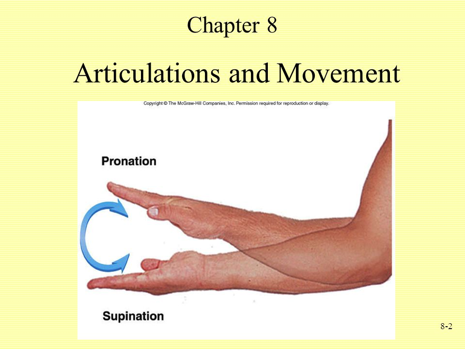 8-2 Articulations and Movement Chapter 8