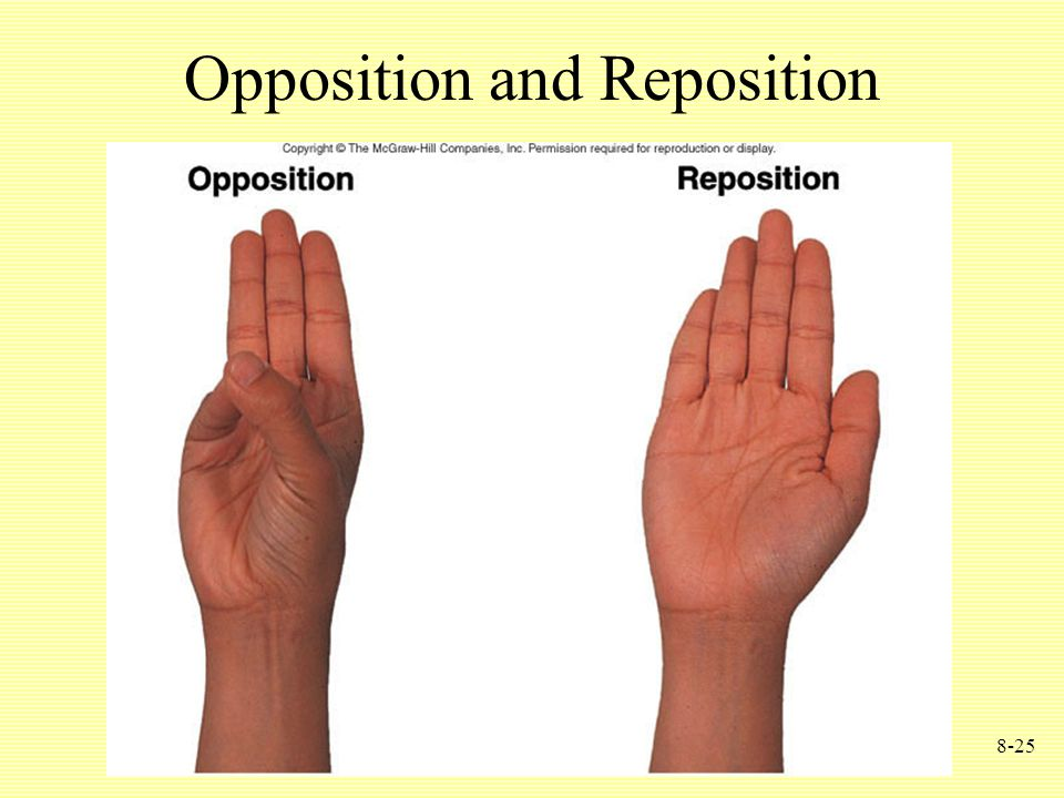 8-25 Opposition and Reposition