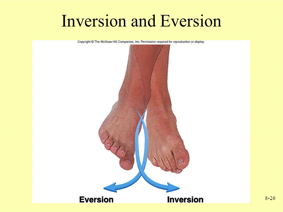 8-26 Inversion and Eversion