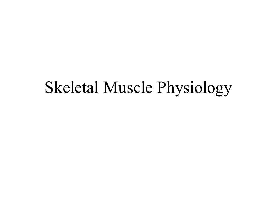 Muscle Hypertrophy Enlargement of a muscle More capillaries More mitochondria Caused by –Strenuous exercise –Steroid hormones