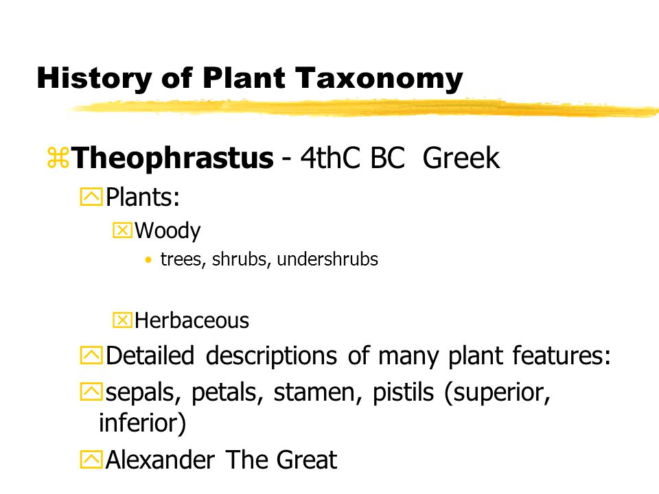 History of Plant Taxonomy zTheophrastus - 4thC BC Greek yPlants: xWoody trees, shrubs, undershrubs xHerbaceous yDetailed descriptions of many plant features: ysepals, petals, stamen, pistils (superior, inferior) yAlexander The Great