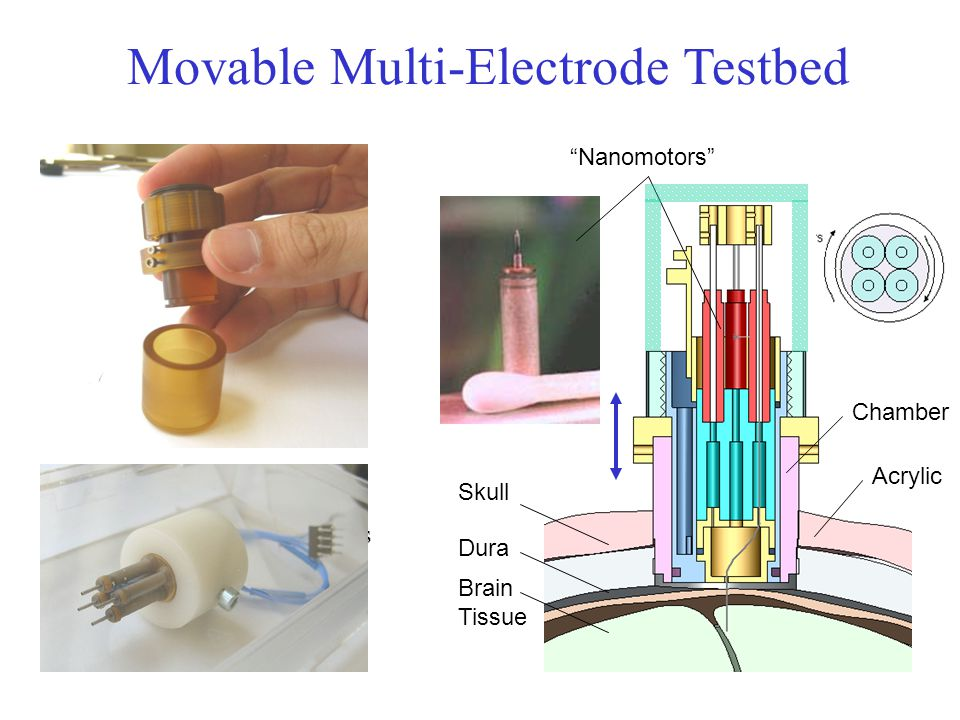 Movable Multi-Electrode Testbed sub-micron steps, 1cm range fits in standard chamber many adjustments can insert micro-capillary Test Multi-electrode issues Test electrode/fluid combos gather data for MEMS spec.s Nanomotors Chamber Acrylic Skull Dura Brain Tissue
