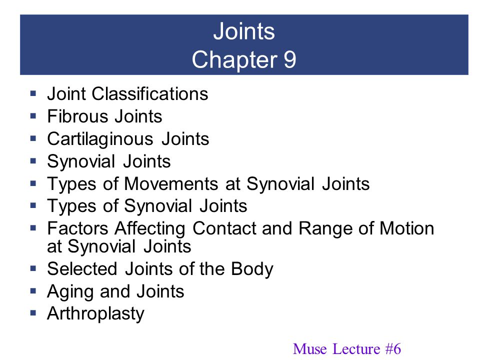 Joints Chapter 9  Joint Classifications  Fibrous Joints  Cartilaginous Joints  Synovial Joints  Types of Movements at Synovial Joints  Types of Synovial Joints  Factors Affecting Contact and Range of Motion at Synovial Joints  Selected Joints of the Body  Aging and Joints  Arthroplasty Muse Lecture #6