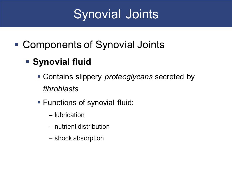 Synovial Joints  Components of Synovial Joints  Synovial fluid  Contains slippery proteoglycans secreted by fibroblasts  Functions of synovial fluid: –lubrication –nutrient distribution –shock absorption