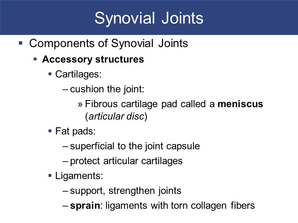 Synovial Joints  Components of Synovial Joints  Accessory structures  Cartilages: –cushion the joint: »Fibrous cartilage pad called a meniscus (articular disc)  Fat pads: –superficial to the joint capsule –protect articular cartilages  Ligaments: –support, strengthen joints –sprain: ligaments with torn collagen fibers