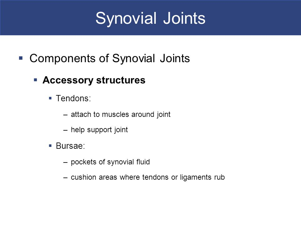 Synovial Joints  Components of Synovial Joints  Accessory structures  Tendons: –attach to muscles around joint –help support joint  Bursae: –pockets of synovial fluid –cushion areas where tendons or ligaments rub