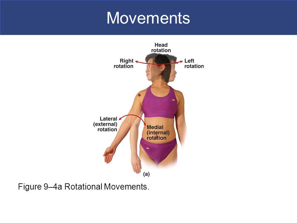 Movements Figure 9–4a Rotational Movements.