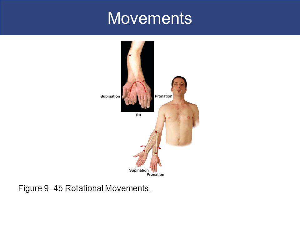 Movements Figure 9–4b Rotational Movements.