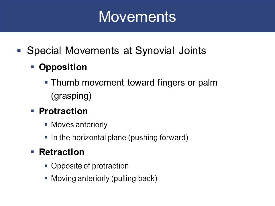 Movements  Special Movements at Synovial Joints  Opposition  Thumb movement toward fingers or palm (grasping)  Protraction  Moves anteriorly  In the horizontal plane (pushing forward)  Retraction  Opposite of protraction  Moving anteriorly (pulling back)