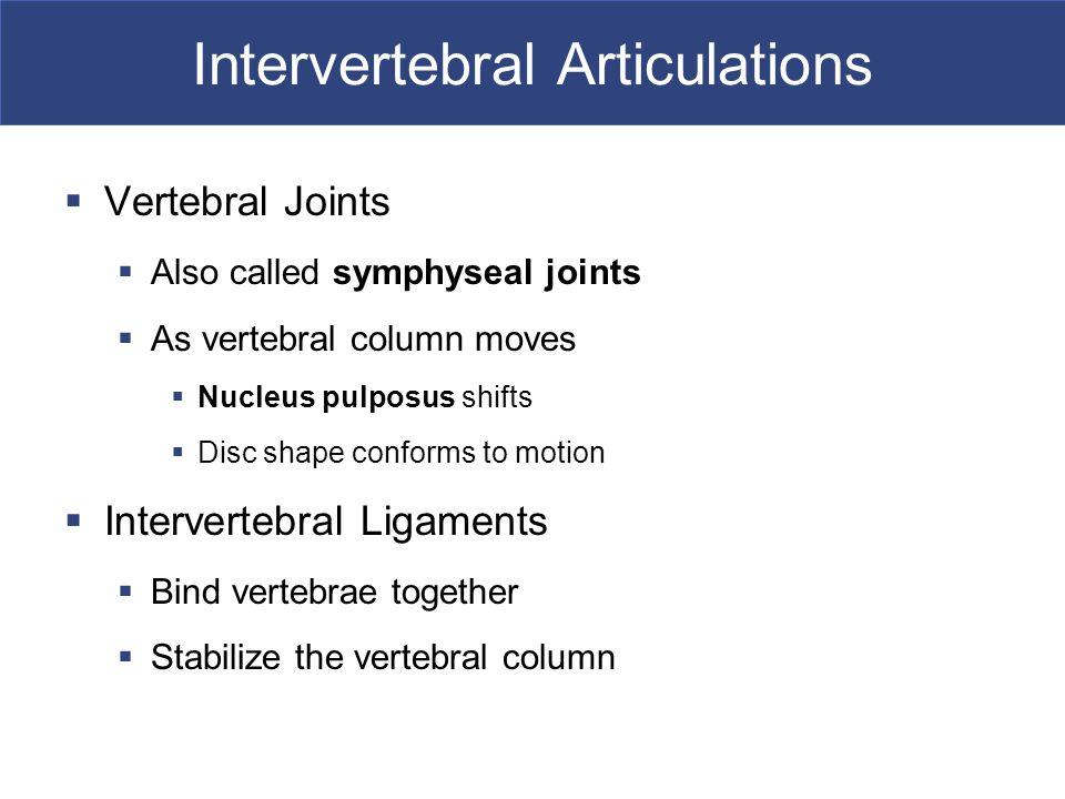 Intervertebral Articulations  Vertebral Joints  Also called symphyseal joints  As vertebral column moves  Nucleus pulposus shifts  Disc shape con
