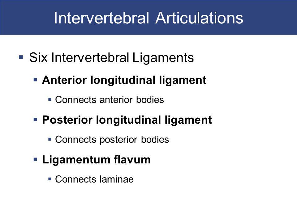 Intervertebral Articulations  Six Intervertebral Ligaments  Anterior longitudinal ligament  Connects anterior bodies  Posterior longitudinal ligam