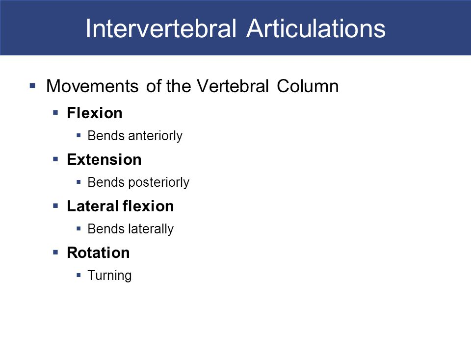 Intervertebral Articulations  Movements of the Vertebral Column  Flexion  Bends anteriorly  Extension  Bends posteriorly  Lateral flexion  Bends laterally  Rotation  Turning