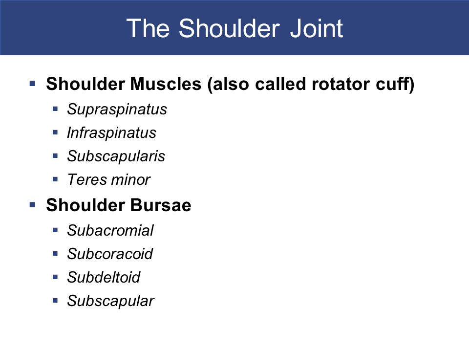The Shoulder Joint  Shoulder Muscles (also called rotator cuff)  Supraspinatus  Infraspinatus  Subscapularis  Teres minor  Shoulder Bursae  Subacromial  Subcoracoid  Subdeltoid  Subscapular