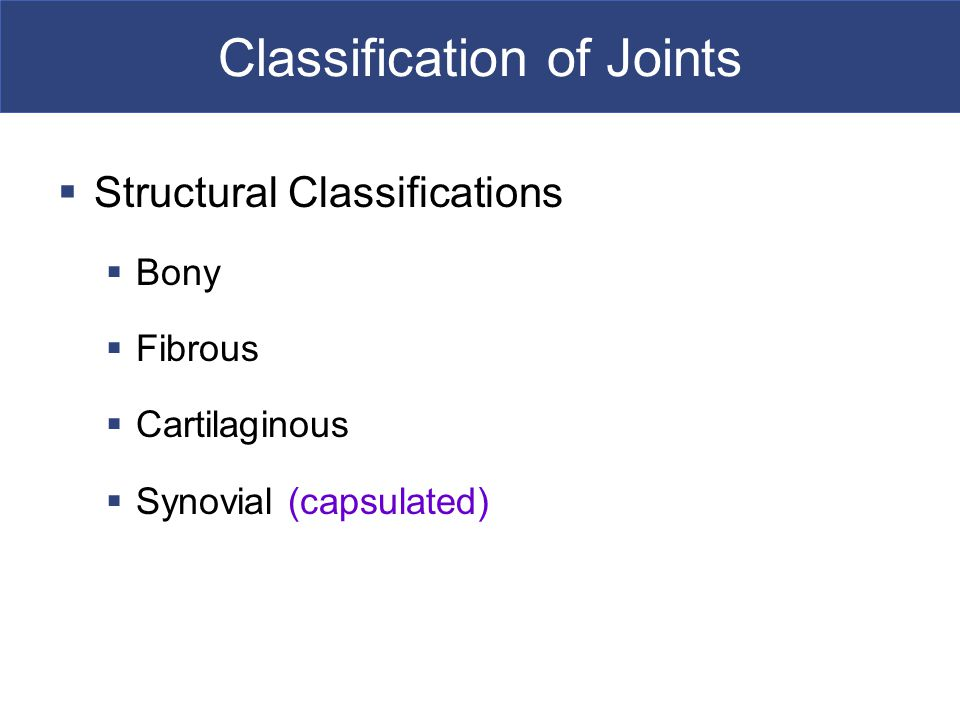  Structural Classifications  Bony  Fibrous  Cartilaginous  Synovial (capsulated)
