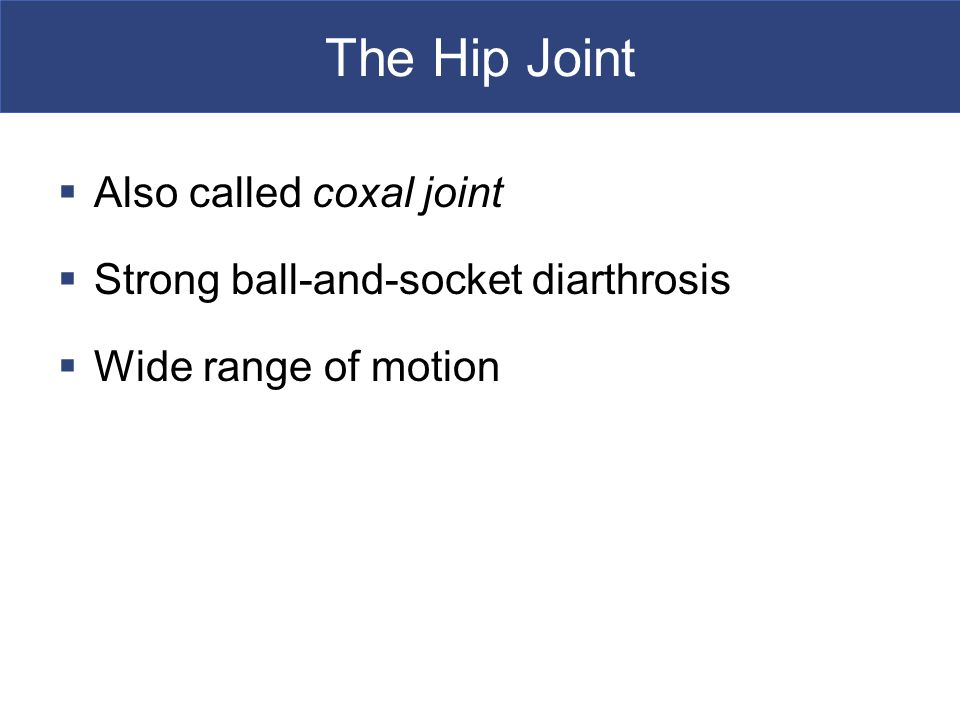 The Hip Joint  Also called coxal joint  Strong ball-and-socket diarthrosis  Wide range of motion