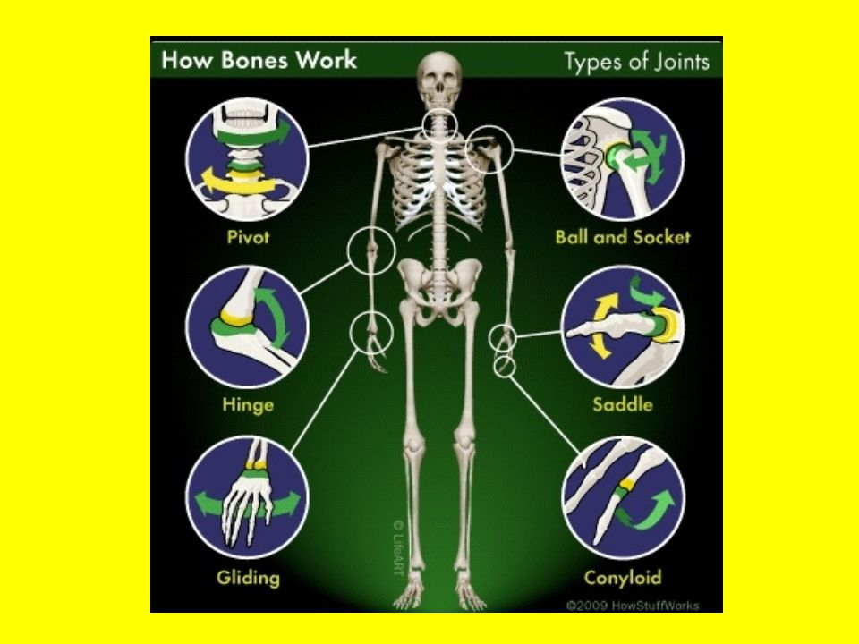 Type 1 – Hinge Joint Hinge – (Uniaxial) Hinge joints, like in your knee and elbow, enable movement similar to the opening and closing of a hinged door.