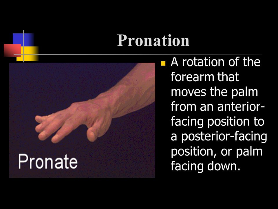 Pronation A rotation of the forearm that moves the palm from an anterior- facing position to a posterior-facing position, or palm facing down.