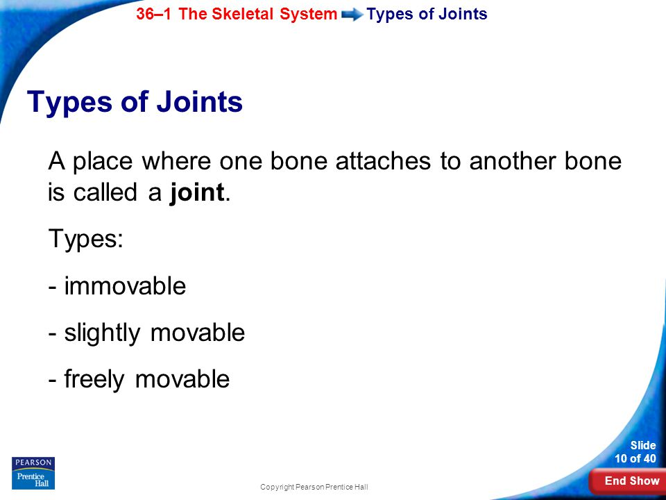 End Show 36–1 The Skeletal System Slide 10 of 40 Copyright Pearson Prentice Hall Types of Joints A place where one bone attaches to another bone is called a joint.