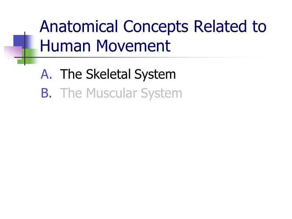 Anatomical Concepts Related to Human Movement A.The Skeletal System B.The Muscular System