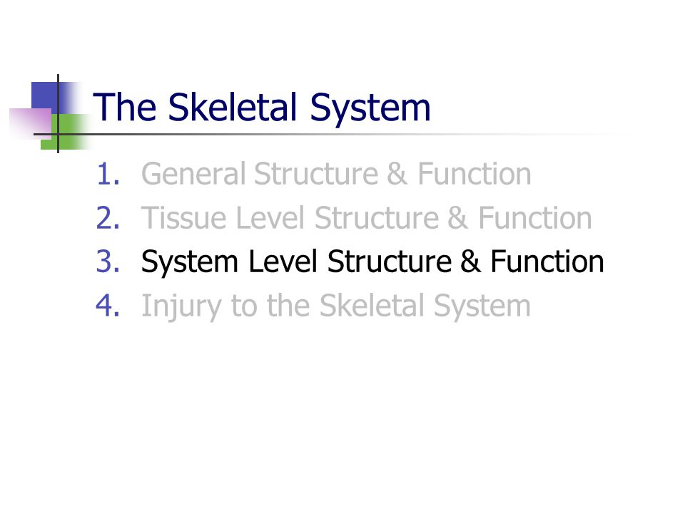 System Level Structure & Function Classification of Joints Accessory Structures System Level Function