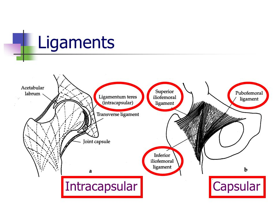 Ligaments IntracapsularCapsular