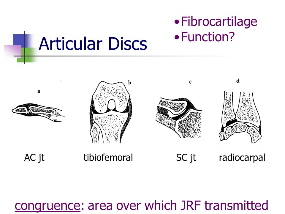 Articular Discs congruence: area over which JRF transmitted Fibrocartilage Function.